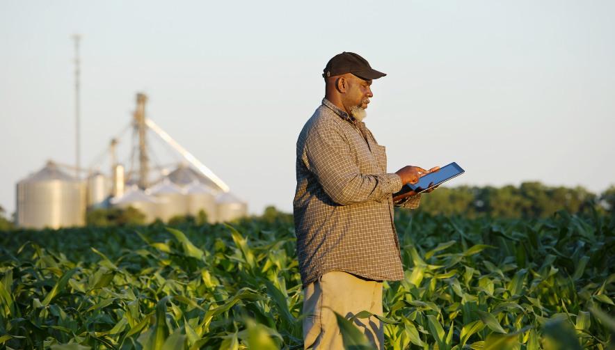 Black farmer with digital tablet in crop field