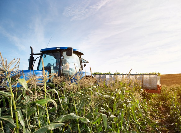 Sweetcorn harvesting with tractor and trailor. Image by © Ocean/Corbis
